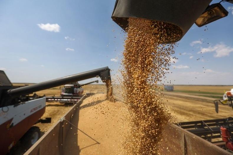 Россия: Тревожный рост цен на пшеницу на внутреннем рынке