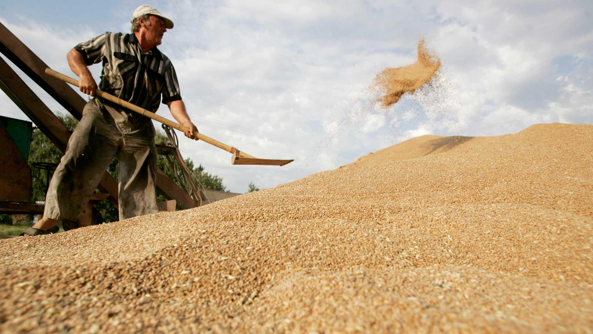 Неурожай в России предвещает серьезный дефицит хлеба и картофеля