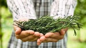 Другие преимущества эфирного масла розмарина для здоровья